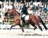 Carlson SL - ph. Pferdebildagentur photec