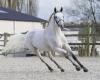 Romeo van de Groenweg - ph. FotoRoyal