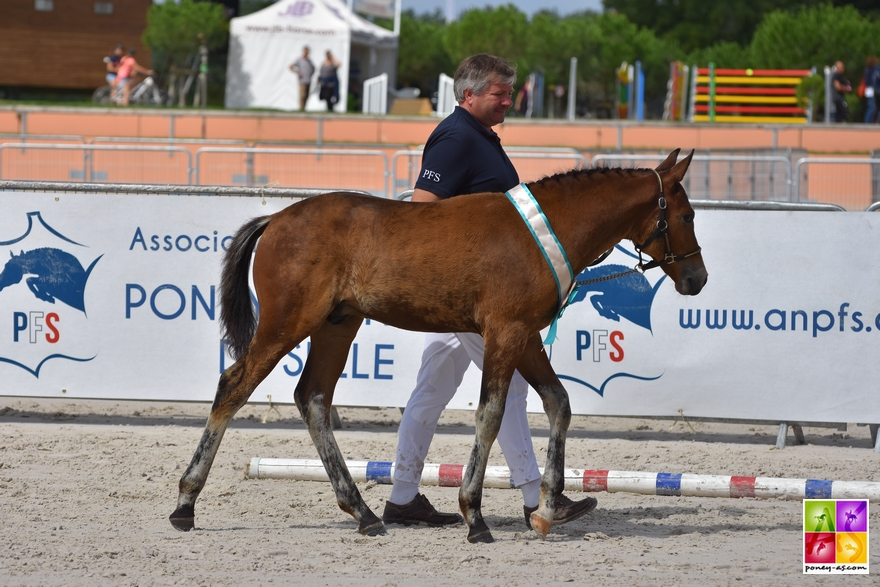 Houla Hop de Brenus - ph. Poney As