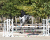 Etalon de sport poney grand et gris