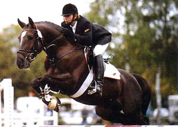 Linaro SL étalon poney - ph. coll. privée