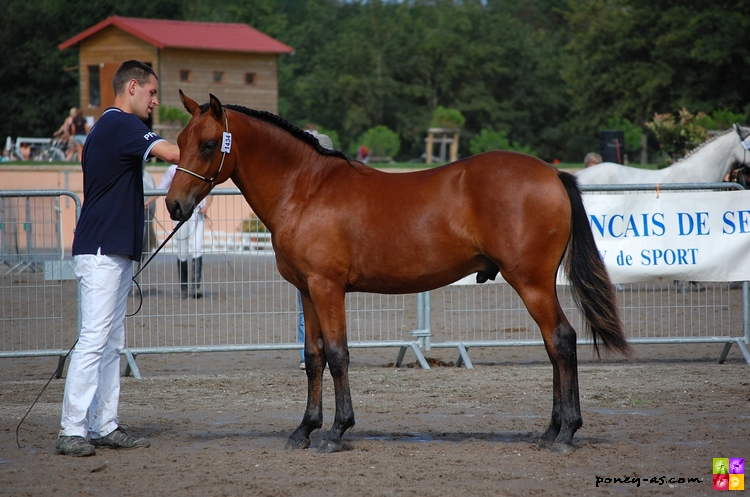 A Fraction of You (Anydale Ron SL x Kantje's Admiraal) - ph. Camille Kirmann