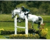 Silver Shadow SL - ph. coll. SL