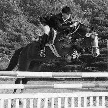 Durello, Drpon étalon poney de sport